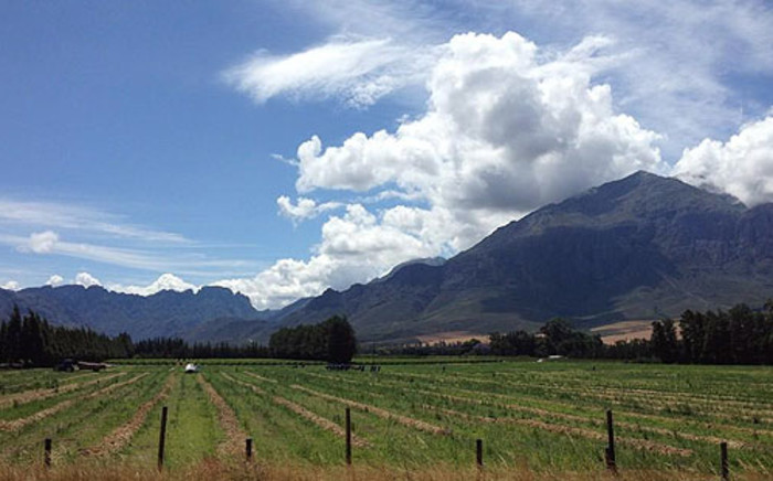 Western Cape farmers have offered to donate animal feed to drought-stricken areas. Picture: Aletta Gardner/EWN.