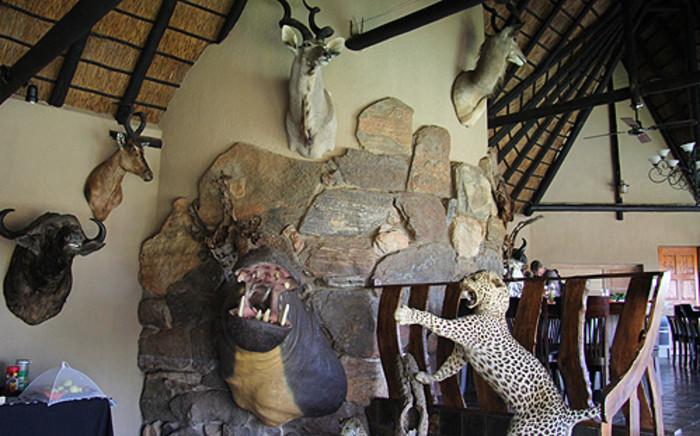 Stuffed animals in the home of rhino poaching accused Dawie Groenewald. Picture: Taurai Maduna/EWN