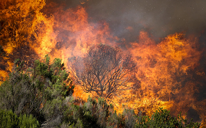 Flames fuelled by strong winds leap into the air as a wildfire which broke out near Muizenberg roars towards Hout Bay on 2 March 2015. Picture: Aletta Gardner/EWN.