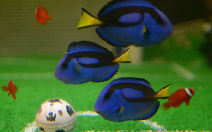 Don T Add Dory Fish To Home Tank Warns Conservationist