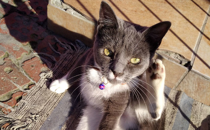 Ash, one of Manenberg resident Faieza Jacobs's three cats, was found dead on 25 July 2021. Picture: Supplied