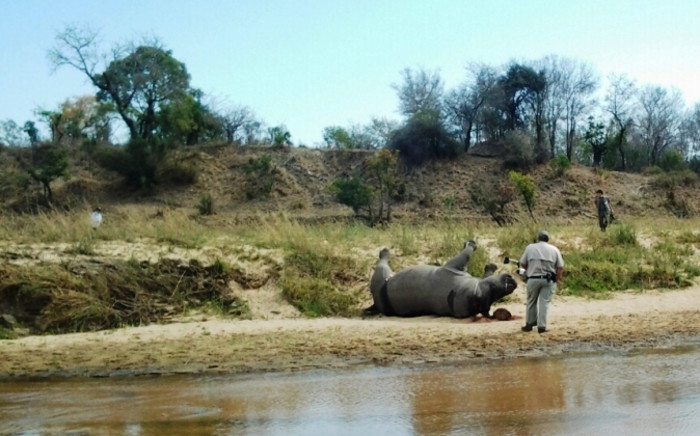 FILE: A ranger inspects a dead rhino found on the banks of a river in the Kruger National Park. Picture: Sapa.
