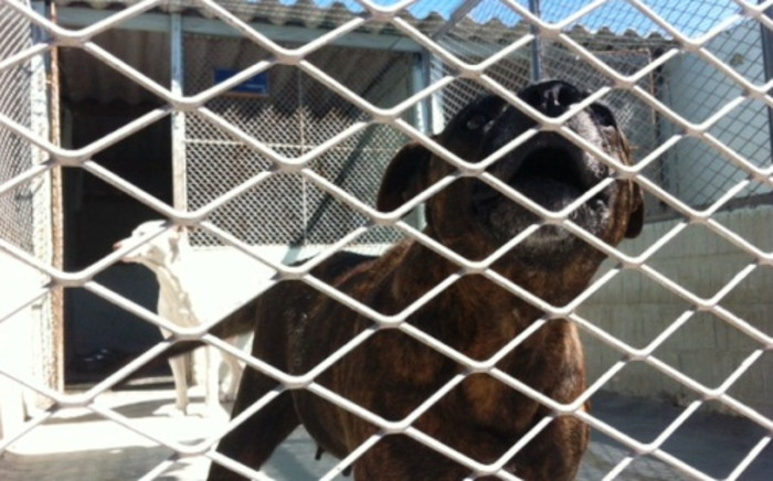 FILE: At least 18 people have been arrested for allegedly running a large dog fighting syndicate. Picture: Eyewitness News.
