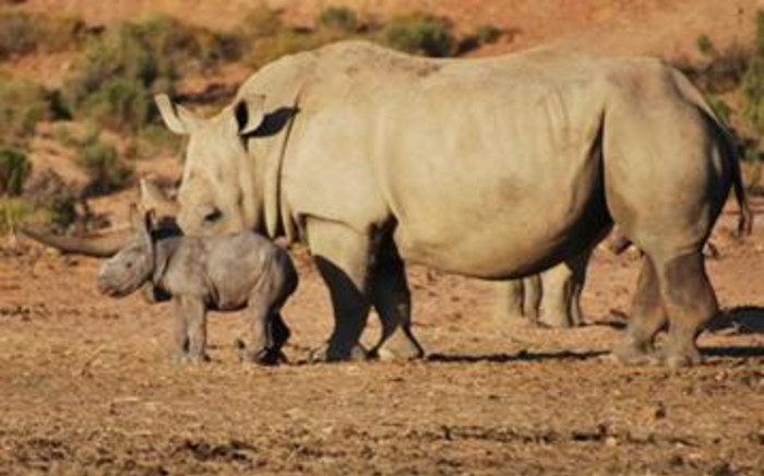 FILE: A rhino and calf at a private game reserve. Picture: Supplied