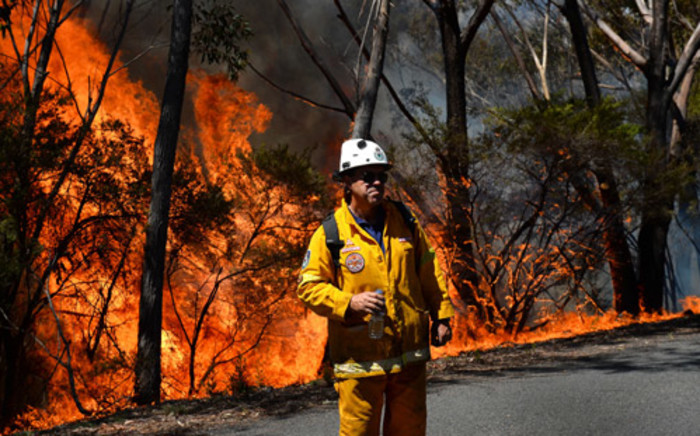 """A firefighter monitors a back burn near Mount Victoria in the Blue Mountains on October 21, 2013, as volunteer fire brigades race to tame an enormous blaze, with officials warning it could merge with others to create a """"mega-fire"""" if weather conditions worsen. Picture: AFP"""