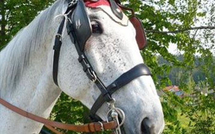 African horse sickness is a serious concern in the Western Cape. Picture: stock.xchng