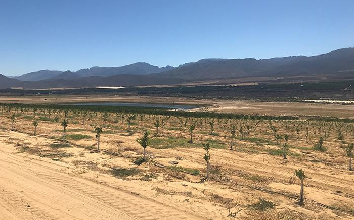 FILE: Farms in the Western Cape are suffering under the current drought.  Picture: Christa Eybers/EWN