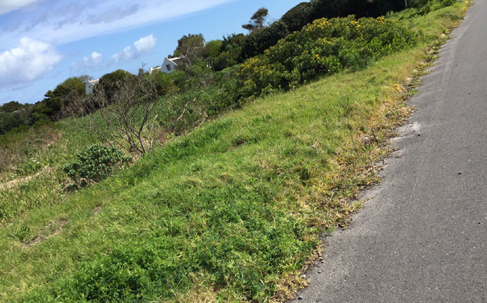 In Nassau Road, Noordhoek, City workers sprayed the herbicide on the sidewalk, which is a few metres from a small river. Picture: Supplied.