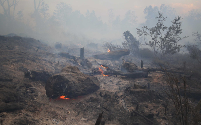 Tree stumps burn as firefighters manager parts of the George wild fire in the Southern Cape. Picture: Bertram Malgas/EWN