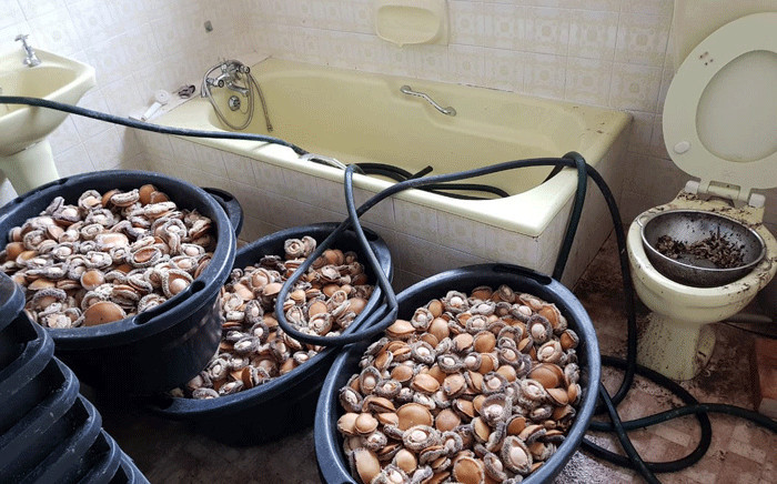 Abalone estimated at R9.5 million was confiscated in Tygerdal, Goodwood by police officials. Picture: @SAPoliceService/Twitter
