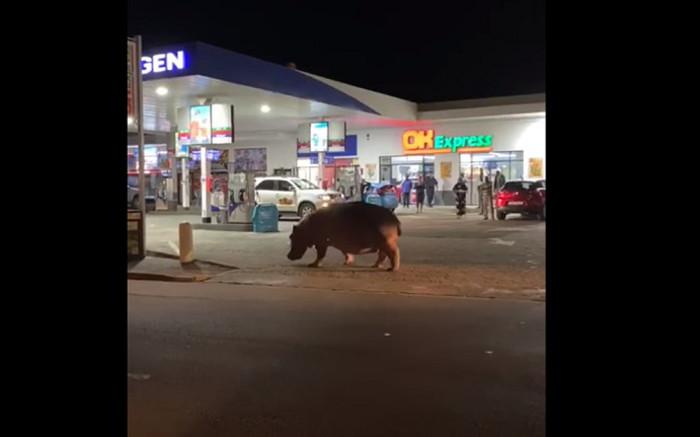 Hippo 'drops by' the Engen garage in KZN - Eyewitness News