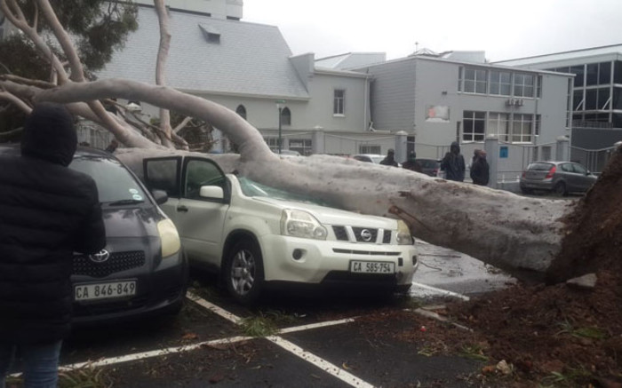 Gale-force winds rip up trees, as heavy rain lashes Cape Town - EWN