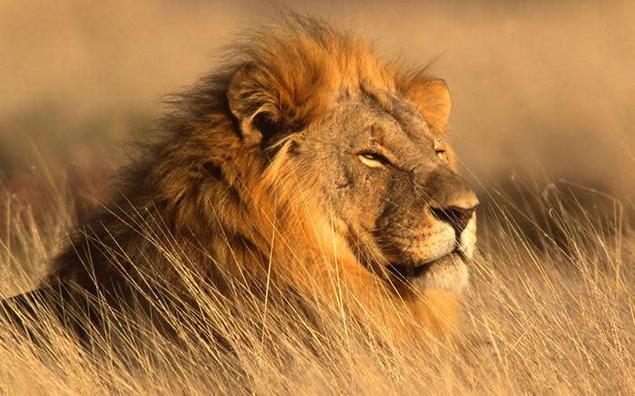 Man vermoor deur leeus by die wildtuin in Pretoria - EWN