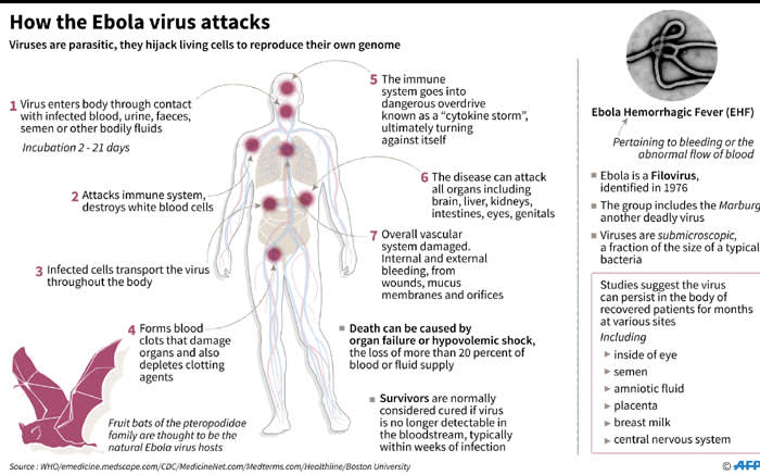 A fact file on how the Ebola virus attacks after a new outbreak in the Democratic Republic of Congo. Picture: AFP.