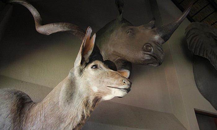 Animals mounted on the wall at Dawie Groenewald's house. Picture: Taurai Maduna/EWN
