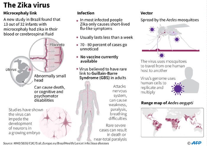 Factfile on Zika. A new study in Brazil has found further evidence of the link between the virus and babies born with microcephaly.