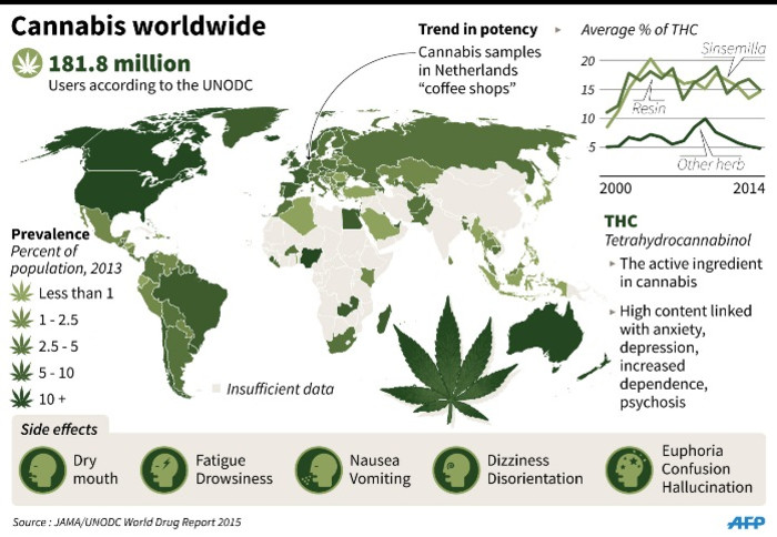 Graphic on worldwide cannabis use.