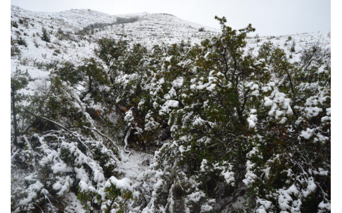 Snowfall in the Golden Gate Highlands National Park. Picture: SANParks.
