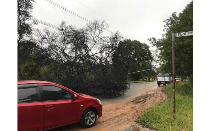 A tree was knocked over following heavy floods in Bryanston on 23 March 2018. Picture: Supplied