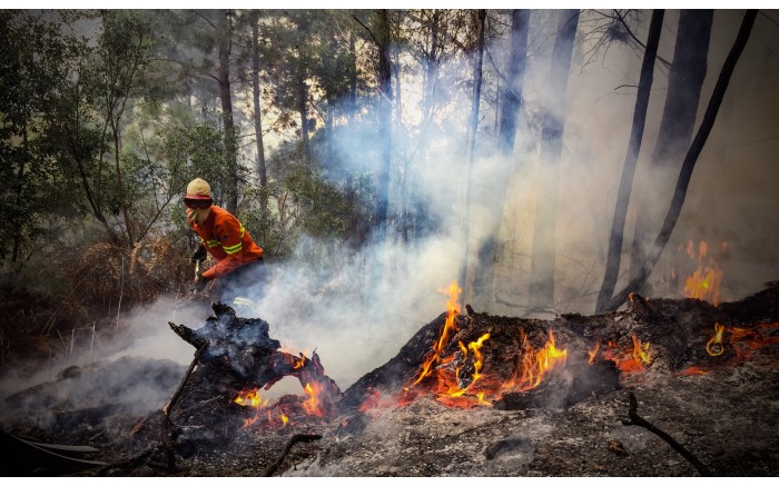 Firefighters beat flames on the slopes of a forest in Knysna