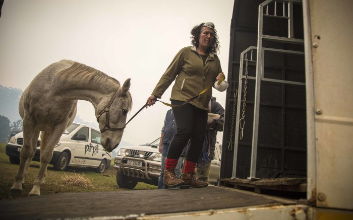 The SPCA and owners evacuate their horses from stables in Buffalo Bay, Knysna.