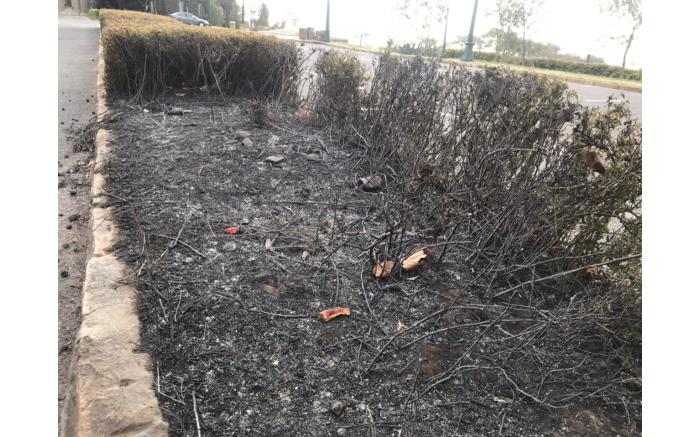 The remains of a little garden after the fire at UCT on 18 April 2021. Picture: Lizell Persens/Eyewitness News