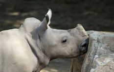 8-year-old boy raises over R6000 for orphaned baby rhino
