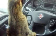 Apparently a cat drives a taxi from Bree to Fourways. Have you seen it?
