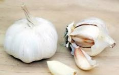 [WATCH] Internet blown away by best way ever to peel garlic!