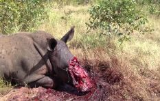 It is now legal to sell rhino horn in South Africa