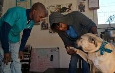 Twenty Cape Town dogs facing euthanasia find safe homes