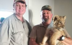 Lion cub worth R50k rescued from house in Cape Town