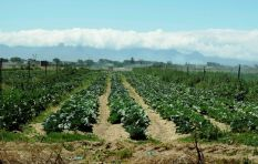 WC government supports preservation of the Philippi Horticultural Area