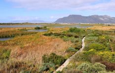 New permits to control collecting and using wild Cape flora