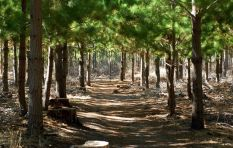 No more tree-felling in Tokai Forest, rules court