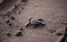 5 tips on how to help save stranded baby sea turtles