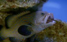 [WATCH] New local wildlife show puts spotlight on Two Oceans Aquarium