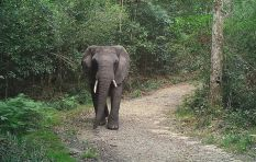 Elephants are number one wild animal sending people to emergency rooms