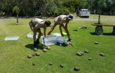Teen conservationist turns hero saving tortoises from Overstrand fire
