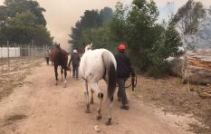 Using livestock as collateral requires sophisticated institutions - Economist