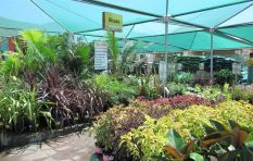 How plant retailers reinvented themselves to survive the W Cape drought