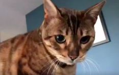 [WATCH] Owner 'autotunes' his cat Elton ...and it's just purrrfect