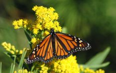How to fill your garden with bees, birds and butterflies