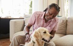 Veterinary surgeon describes what happens when your pet is put down
