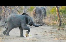SA YouTube channel earns one billion views with spectacular wildlife footage