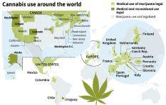 Medicinal marijuana draft guidelines for SA published