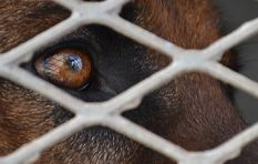 Escalation of Cape Town dog thefts confirms SPCA