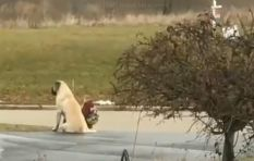[WATCH] Dog makes sure girls are safe and waits with them at bus stop