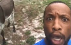 [WATCH] Funny Lion King 'Circle of Life' rendition has social media talking