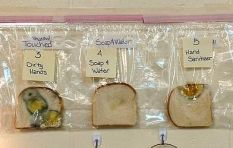 Third-graders mould experiment show fungus on bread when touched by dirty hands